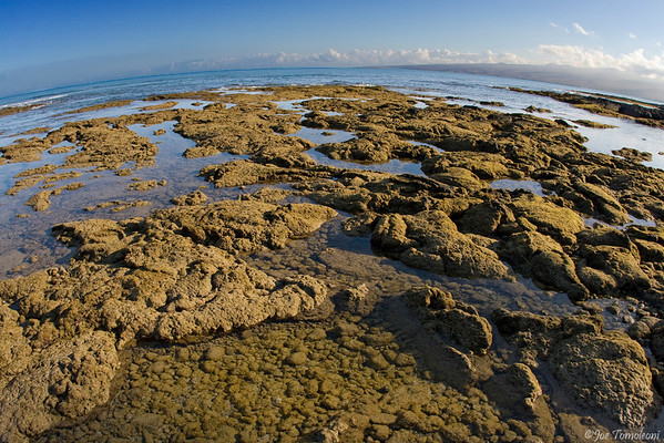 Hawaiian Tidepools