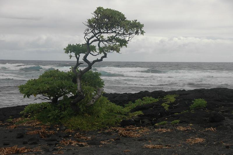 Hawaii-1011