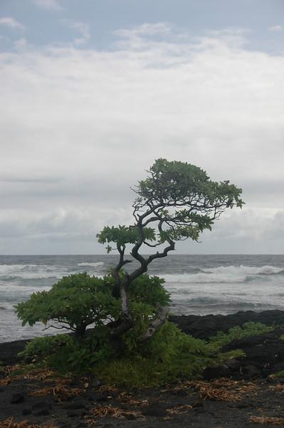 Hawaii-1012
