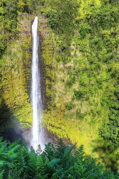 Akaka Falls - Hawaii Island