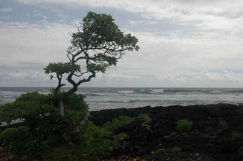 Hawaii-1014