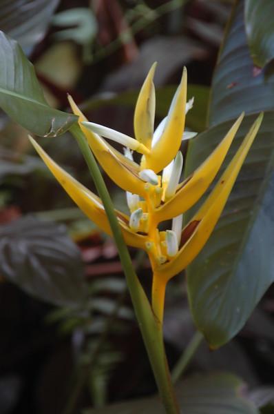 Hawaii-0926