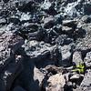 Hawai'i Volcanoes National Park - Kilauea Iki trail in crater