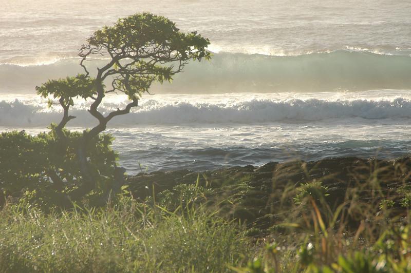 Hawaii-1057