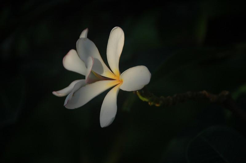 Hawaii-0264