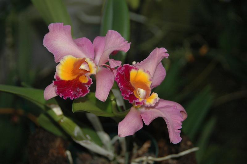 Hawaii-0815