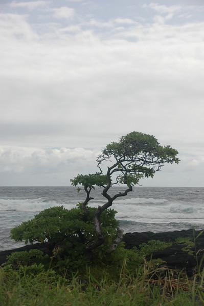 Hawaii-1009