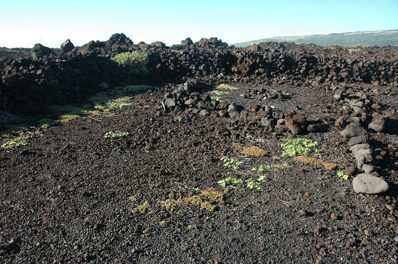 Hawaii-1102