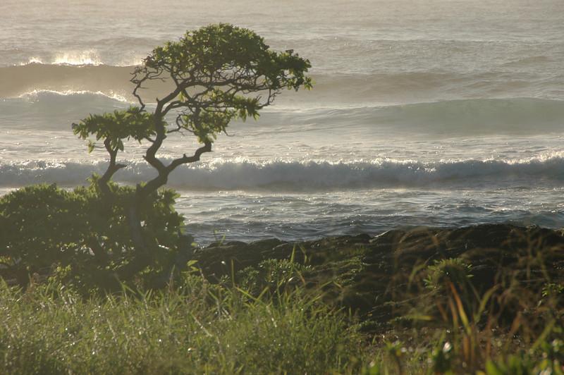 Hawaii-1056