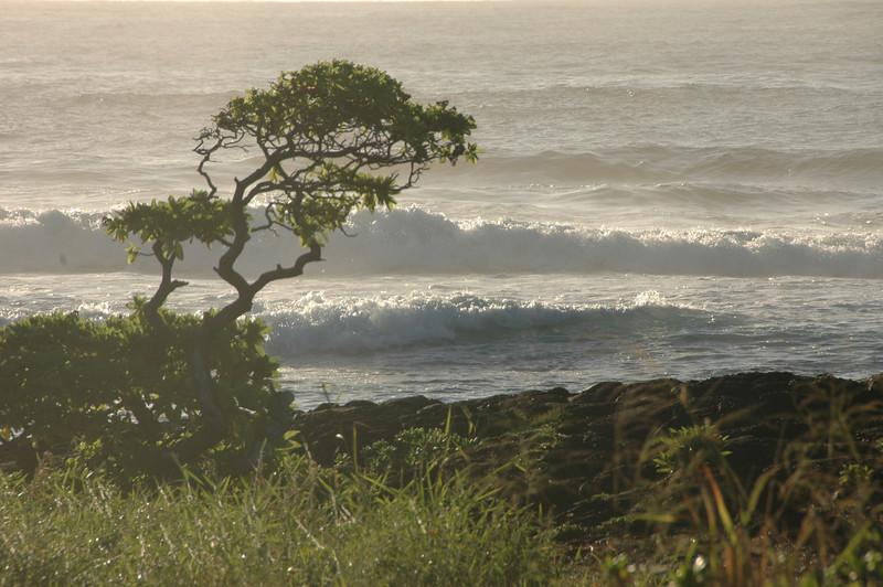 Hawaii-1058