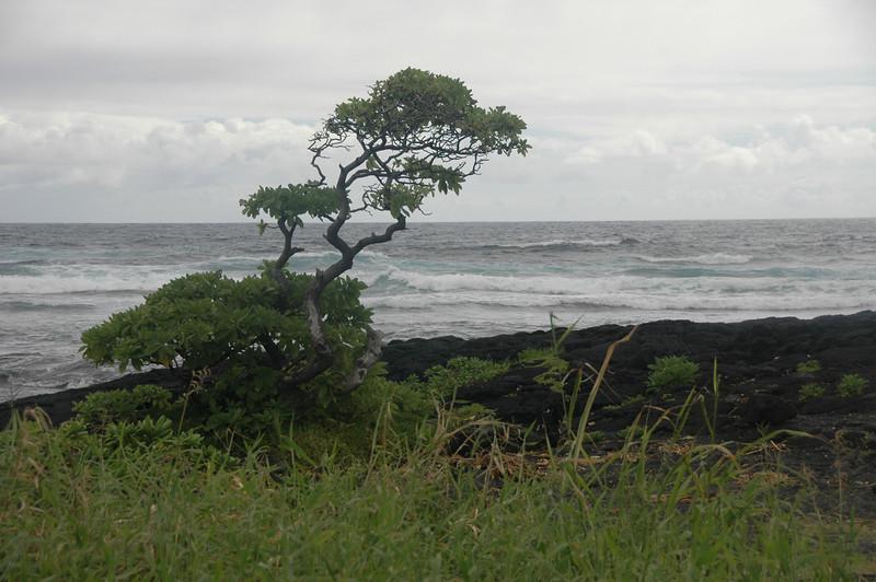 Hawaii-1010