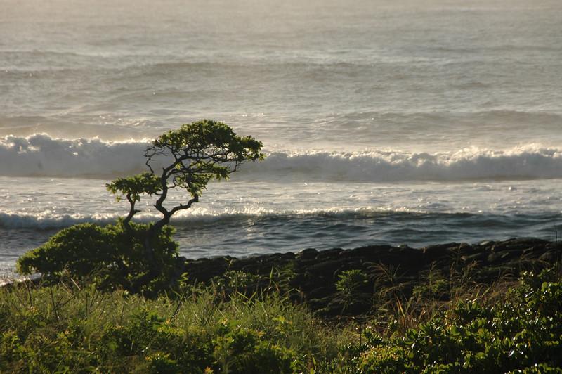 Hawaii-1055