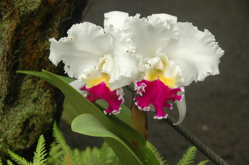 Hawaii-0928