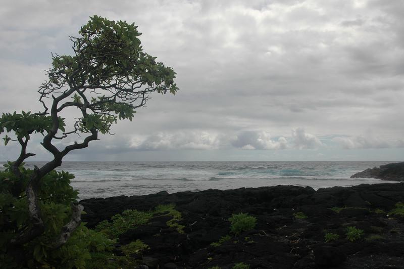 Hawaii-1039