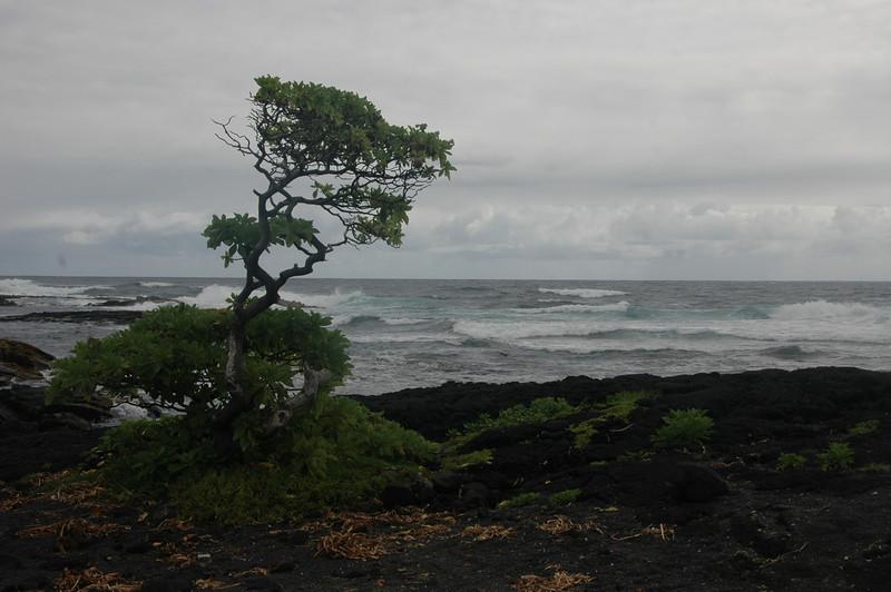 Hawaii-1013