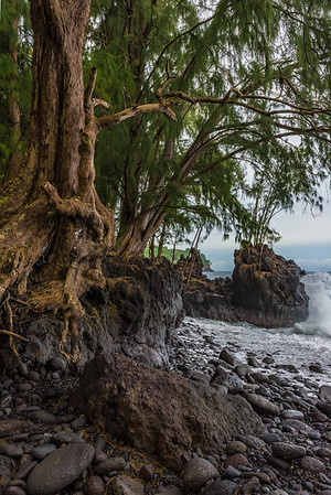 From Maui, we flew to Hawaii - the big island. This is Laupahoehoe beach.
