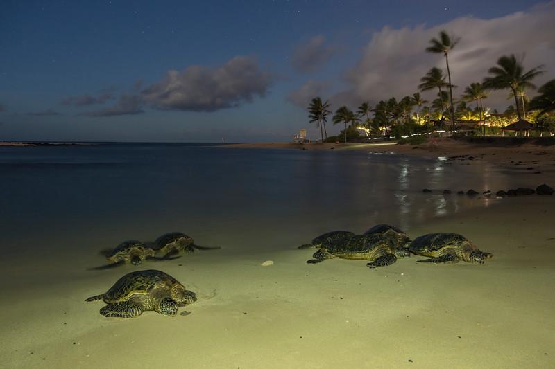 Light Painted Sea Turtles