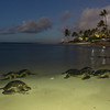 Light Painted Sea Turtles