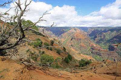 Waimea Canyon flanked by dead tree stumps as seen from Koke'e Road.