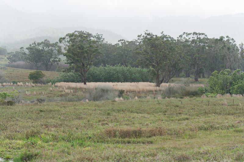 Flemming pastureland