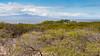 Wetland at Kaukaukapana