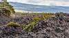 Upper Waiakea Forest Reserve