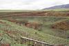 DSR Review, North Poamoho Stream, O`ahu, Hawai`i