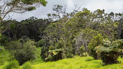 Grounds of Keahou Bird Conservation Center, Hawaii