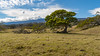 Kapapala Ranch