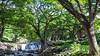 Queen Liliuokalani Park, O`ahu, Hawai`i