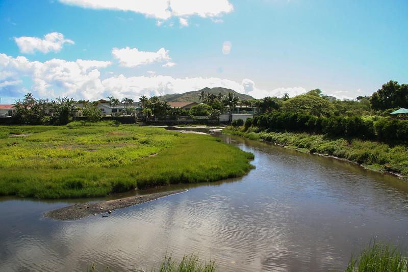 De Vries wetland in Kailua, O`ahu, Hawai`i