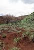 DSR Review, North Poamoho Stream near Thomsom Corner, O`ahu, Hawai`i