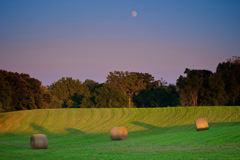 Moon watching over bales at sunset.