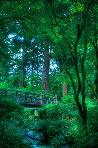 We Saw the Same Dream Limited Edition #3 of 150 Portland Japanese Garden