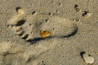 Higbee beach,Cape May,NJ