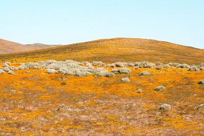 High Desert Splendor