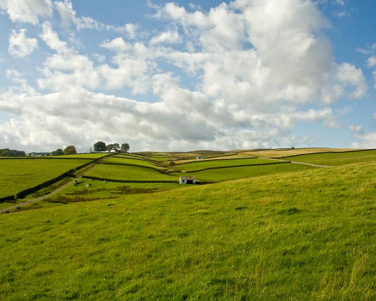Bowlees fields