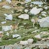 Morning visitors at camp