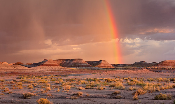Petrified Forest National Park<br /> 2013