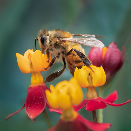 Bee<br /> 2018