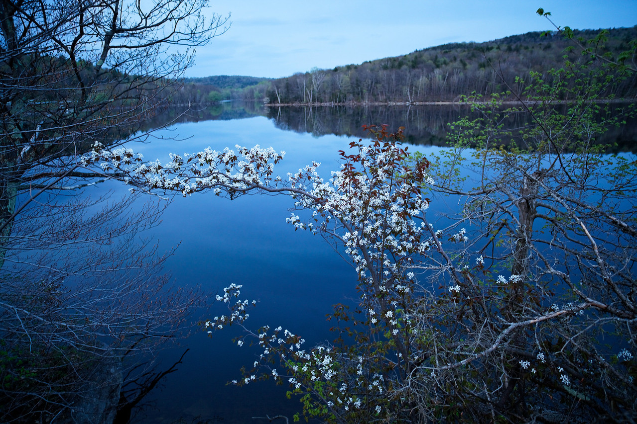 Blossoms and water, sunset, Vermont