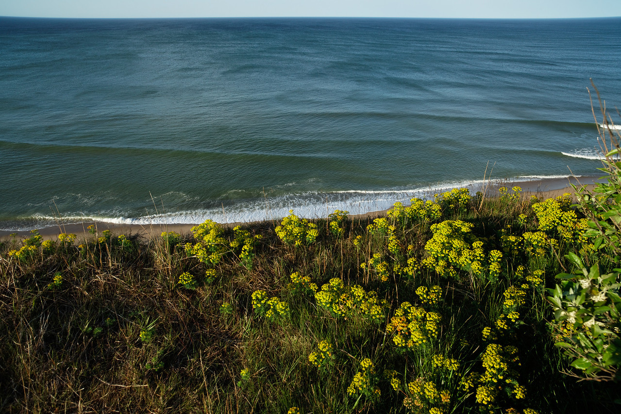 Rolling waves, yellow flowers