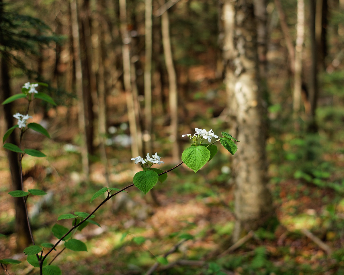 Flowers and Forest, narrow depth of field
