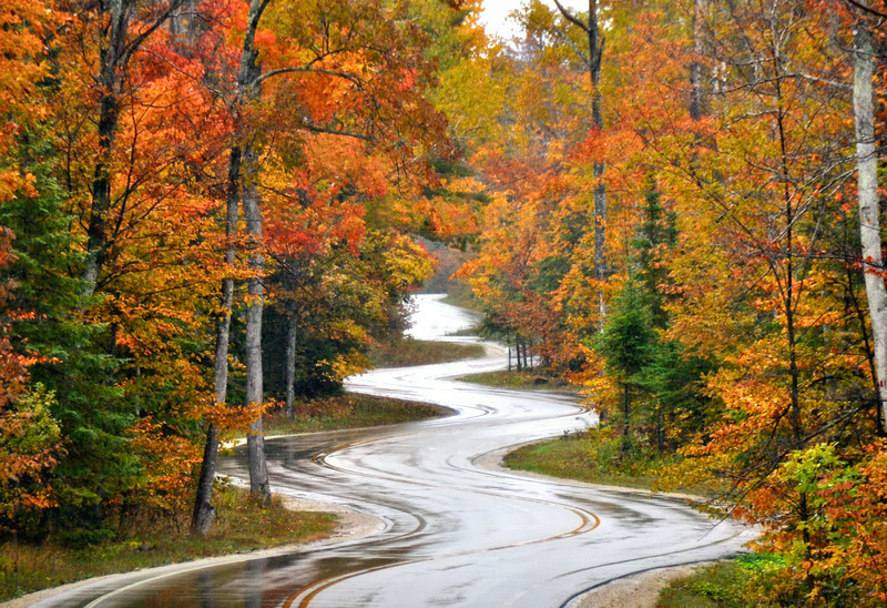 Northport Road After The Rain - Fall