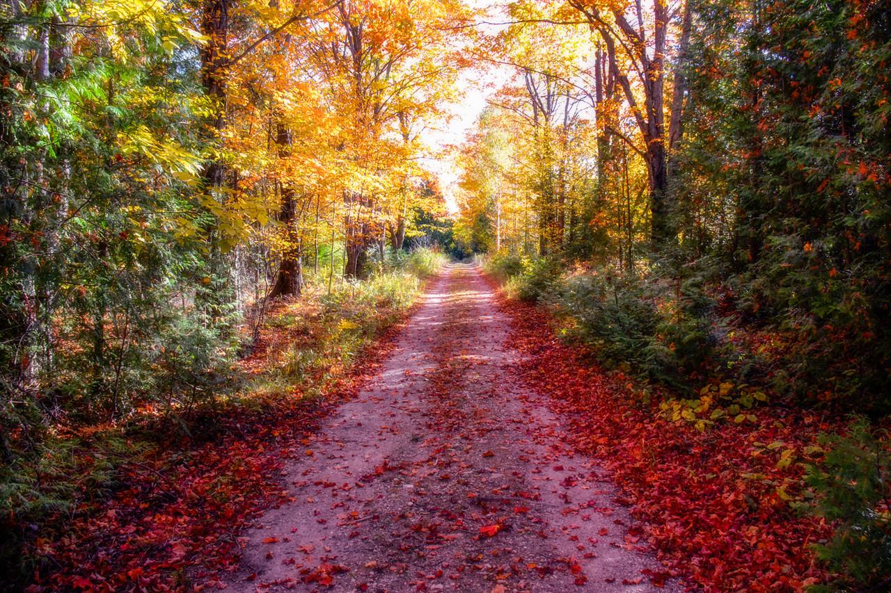 Three Springs Lane In Autumn