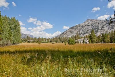Beautiful Mountain Meadow