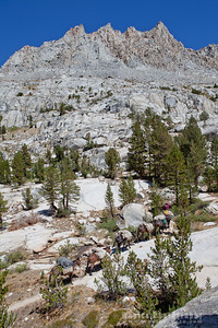 Mule Train Under the Peaks