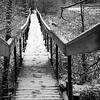 Boardwalk bridge in Cootes Paradise