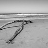 Wishbone log on beach, Monterrey, California.