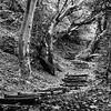 Forest trail stairway - Hungary Balaton Uplands.